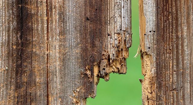Cosa sono i trattamenti antitarlo a microonde per travi